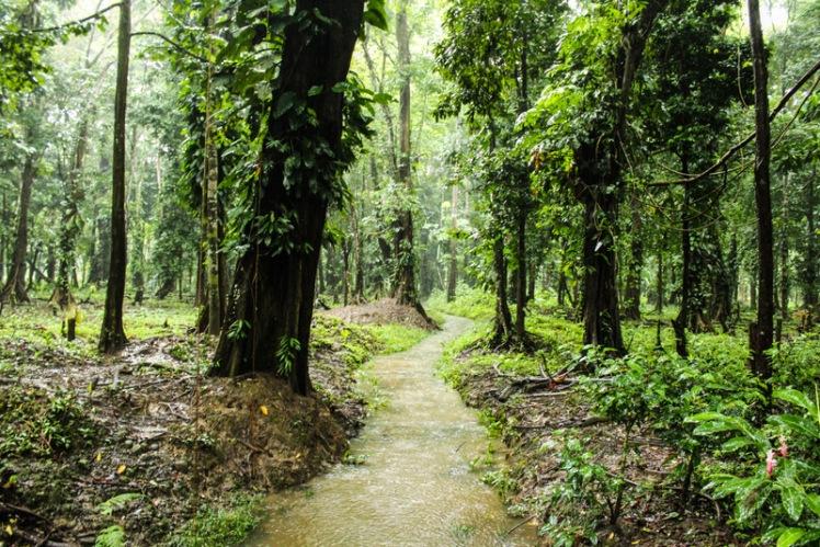 En Puerto Viejo (Caribe), lluvia y verde