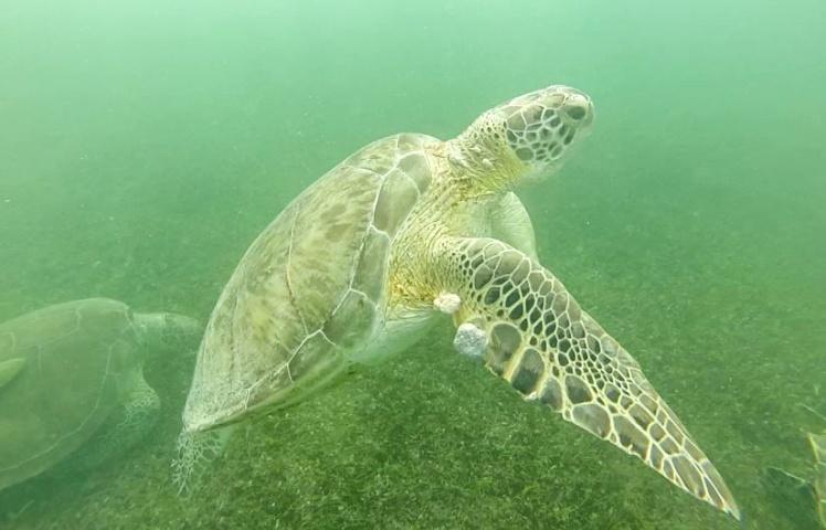 Nadando con las tortugas en Akumal