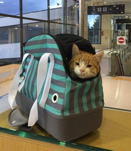 Ripio muy cómodo en su bolso listo para abordar